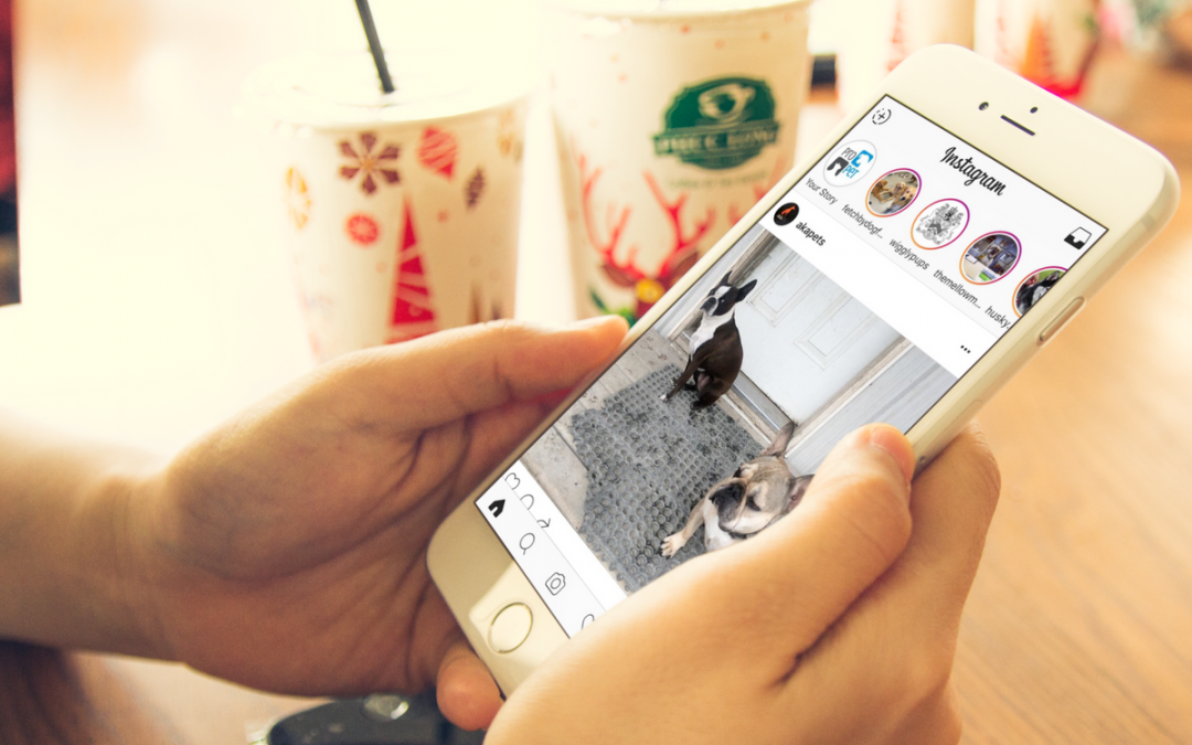 How Instagram Stories Can Help Your Pet Business
