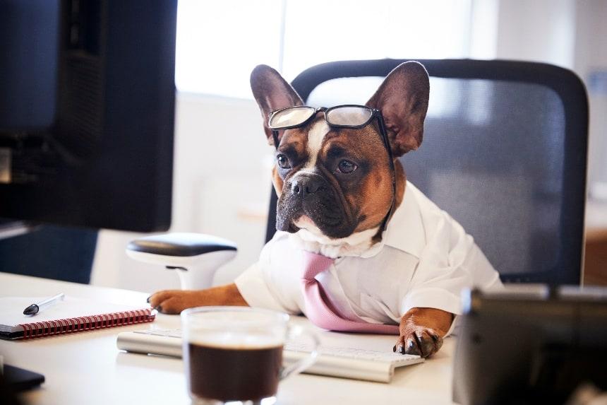 5 Benefits of Having Kennel Software