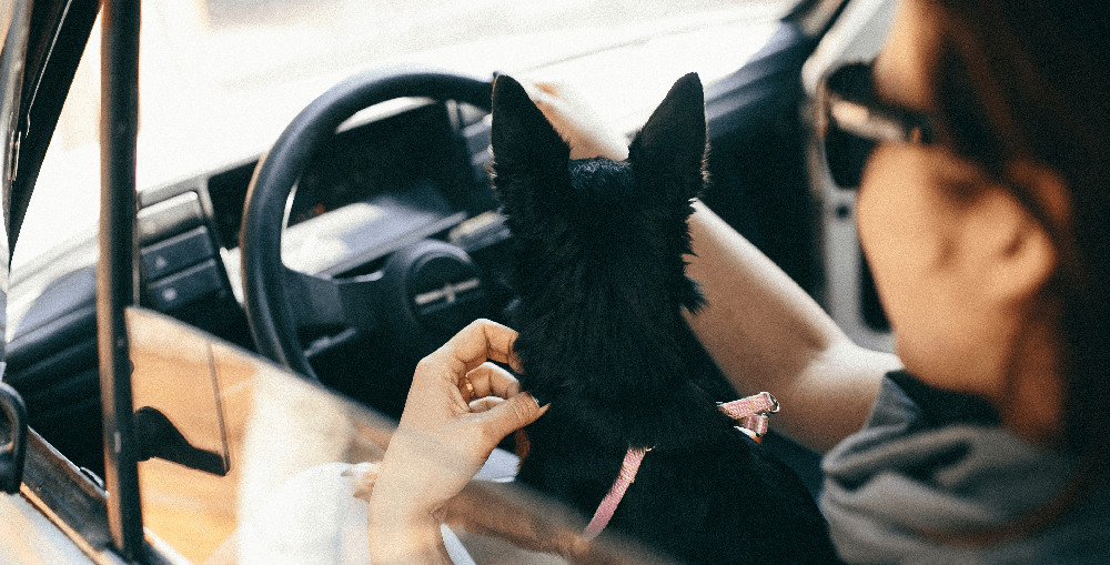 How to Keep Your Dog Calm on the Way to the Kennel