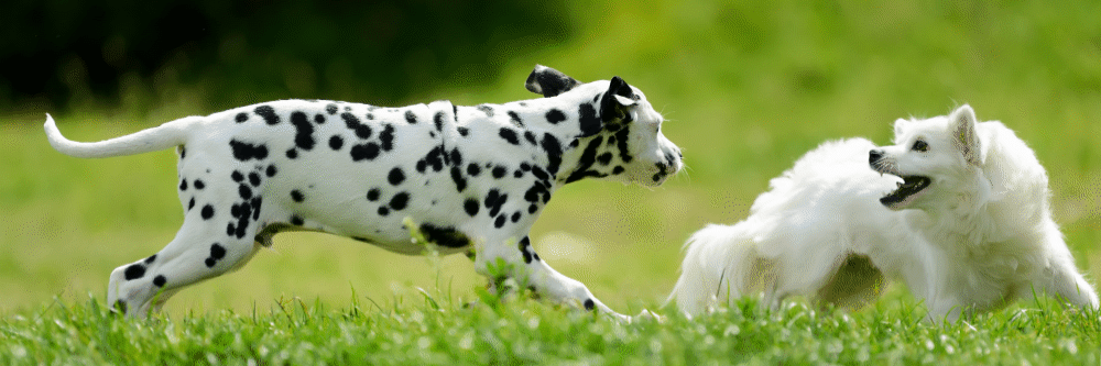 3 Ways to Optimize Your Dog Daycare