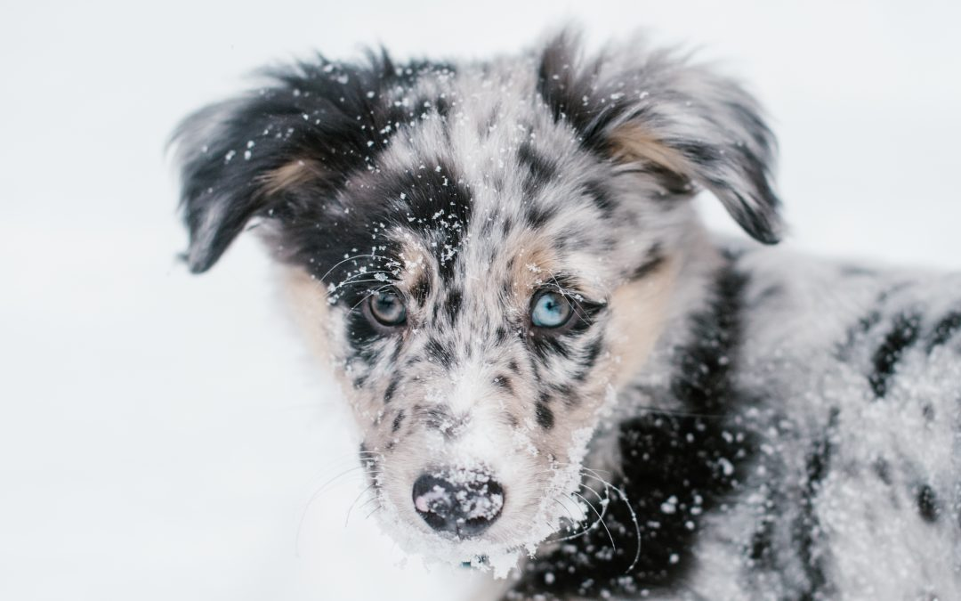 The ProPet Photography Blog: Using Snow to Enhance Your Pet Photography